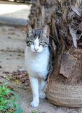 Модельный дикий кот Стоковые Изображения