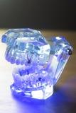 Модель зубоврачебных зубов клиническая Стоковые Изображения