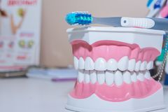 Модель зубов и зубоврачебный инструмент на белой предпосылке Здоровая концепция заботы различные типы зубных щеток красивейшая ус Стоковые Изображения RF