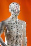 Модель иглоукалывания - альтернативная медицина - Китай стоковые фотографии rf