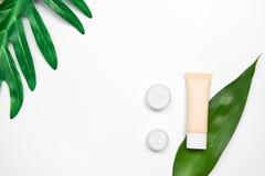 Модель-макет косметической cream бутылки, пустого пакета ярлыка и ингридиентов на зеленом цвете выходит предпосылка Стоковые Изображения RF
