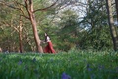 Модная дама держит дерево в английском полесье в предыдущей весне, с bluebells на переднем плане стоковые фотографии rf