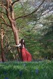 Модная дама полагается против дерева в английском полесье в предыдущей весне, с bluebells на переднем плане стоковые изображения