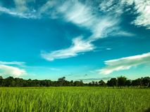 Мое поле Стоковое Изображение