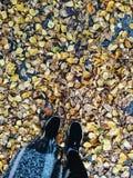 Мое счастливое ðŸ'-ðŸ'-ðŸ'- ' ðŸ осени стоковое изображение rf