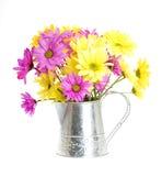 может вода shasta цветков маргаритки Стоковые Изображения