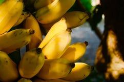 Может обеспечить силу соединить 100 калорий, сахар природа 3, как сахароза, фруктоза, Стоковые Изображения RF