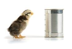 может олово 2 цыпленоков Стоковая Фотография