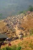Может рынок буйвола Cau в Вьетнаме Стоковая Фотография RF