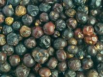 можжевельник ягод стоковые изображения rf