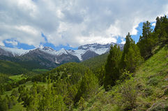 Можжевельник в горах Стоковое Фото