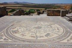 Мозаика на Volubilis Стоковые Изображения