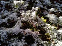 Мозаика Frost Стоковое фото RF