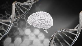 Мозг и винтовая линия ДНК иллюстрация штока
