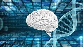 Мозг и двойная спираль иллюстрация штока