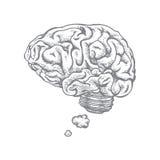 Мозг и идея Стоковые Фотографии RF