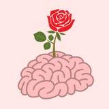 Мозг и поднял Стоковая Фотография RF