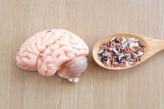 Мозг и рис Стоковые Фото