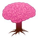 мозг укореняет стержень Стоковое Изображение