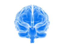 мозг Стоковое Фото