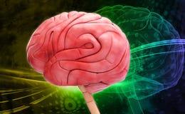 мозг иллюстрация штока