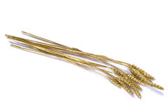 мозоль золотистая стоковое изображение rf