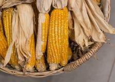 Мозоль, пшеница стоковое фото rf