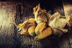 Мозоль Сухие стержни кукурузного початка на деревенской таблице дуба стоковые изображения rf