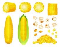Мозоль шаржа Золотой сбор маиса, зерна попкорна хлебородные и сладкая мозоль Кукурузный початок, очень вкусный вектор овощей иллюстрация штока