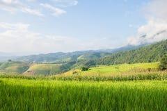 Мозоль и рис field терраса и лачуга с предпосылкой горы стоковые фото