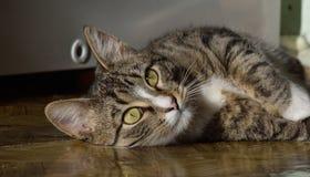 Мои коты Стоковое Изображение