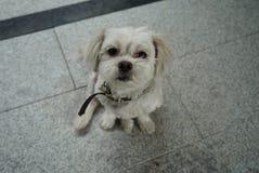 Мои прелестные камешки маленькой собаки стоковое изображение