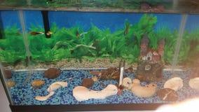 Мои рыбы Стоковая Фотография RF