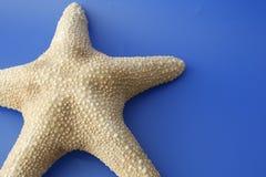 мои starfish Стоковое Фото