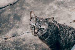Мой кот стоковая фотография