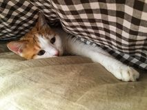 Мой кот любимчика Стоковые Изображения RF