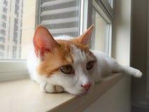 Мой кот любимчика Стоковые Изображения