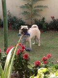 Мой Кузен-щенок стоковые фото