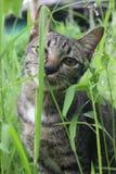 МОЙ ЛЮБИМЕЦ CAT стоковые фотографии rf
