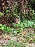 Мой маленький кот стоковая фотография rf