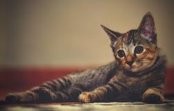 Мой маленький кот любимчика Стоковые Фото