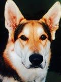 Мой первый тигр собаки стоковые изображения