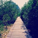 мой путь Стоковое Изображение RF
