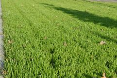 Мой район Малая деревня на юге  России Лужайка уравновешенной травы на главной улице Стоковые Фотографии RF