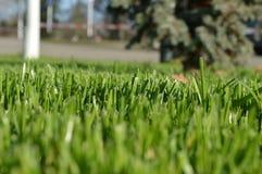 Мой район Малая деревня на юге  России Лужайка уравновешенной травы на главной улице Стоковое Фото