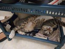 Мой режим сна кота стоковые фото