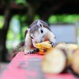 Мой симпатичный банан Стоковые Изображения