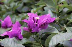 Мой сиротливый цветок Стоковое фото RF