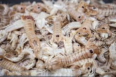 Моллюск, mantis squilla на рыбном базаре стоковая фотография rf