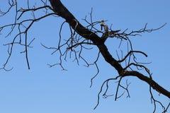 Молния дерева стоковые фотографии rf